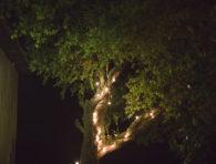 arboles con encanto (5)
